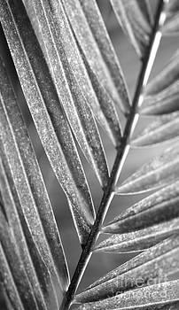 Leaf Shapes VI by Eyzen Medina