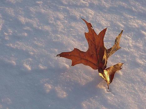 Leaf by SW Johnson