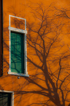 Leafless tree shadow on vivid orange wall by Jirawat Cheepsumol