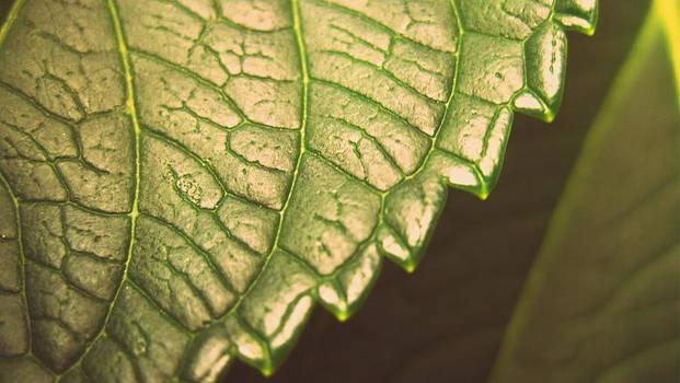 Leaf's Edge by Jhoy E Meade