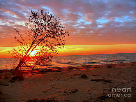Leaning Tree Sunrise by Pete Dionne