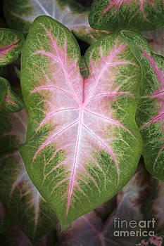 Leaves 2 by Tony Cordoza