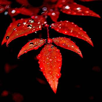 Leaves and Drops by William Bartholomew