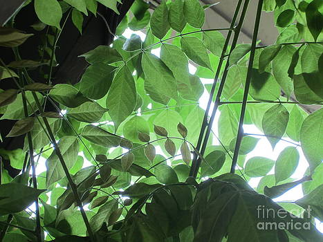 Leaves and Light by Laurianna Taylor