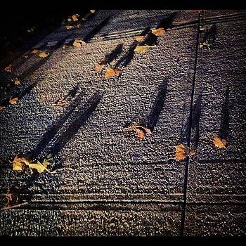 #leaves #concrete #shadow #fall by Shawn Who