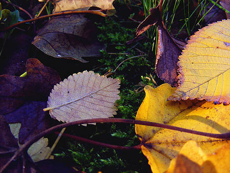 Leaves  by Eremia Catalin