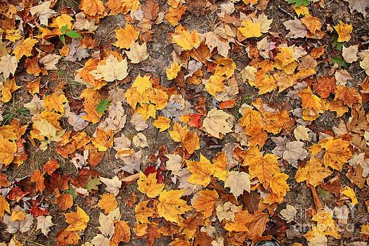 Michael Mooney - Leaves Fall