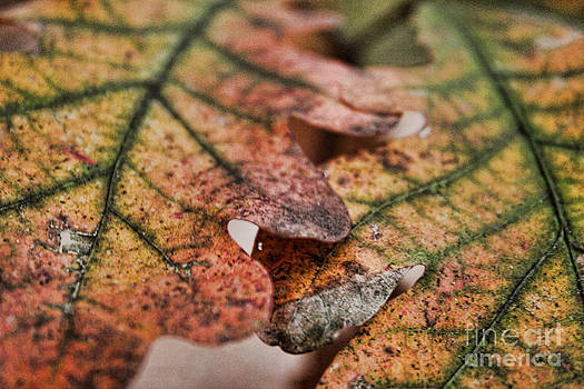 Leaves by Kristy Ollis