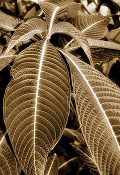 Leaves by Laura Schramm-Behnke