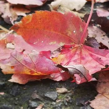 #leaves #newengland by Sacred  Muse