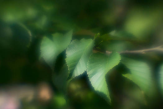 Leaves of Serenity by Kimberly Ayars
