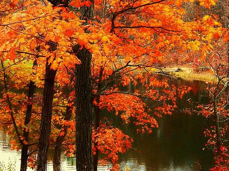 Leaves Over Water by Joyce Kimble Smith