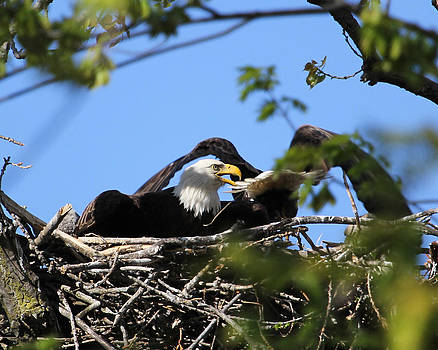 Leaving the nest by Bruce  Morrell