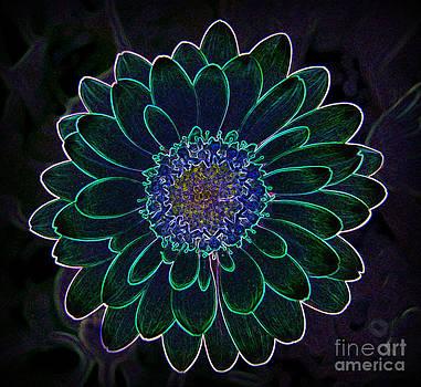 LEDsy Daisy by C Ray  Roth
