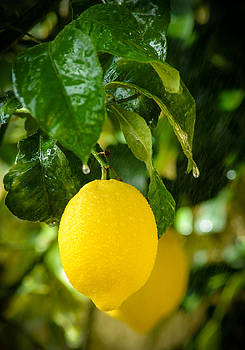 Lemon Down The Rain by Tetyana Kokhanets