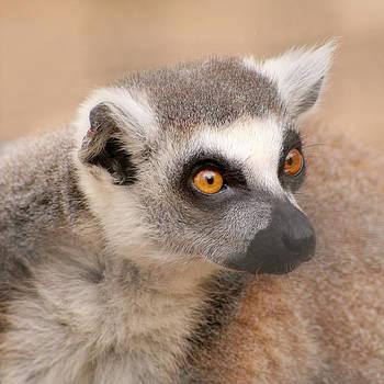Lemur by Bob and Jan Shriner