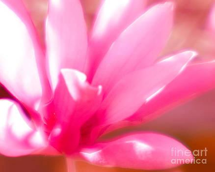 Sonja Quintero - Lensbaby Pink
