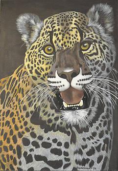 Leopard by Denis Gloudeman