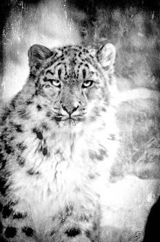 Emily Stauring - Leopard Eyes