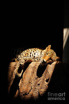 Leopard by Frederiko Ratu Kedang