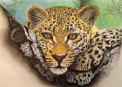Leopard in a Tree I. by Paula Steffensen