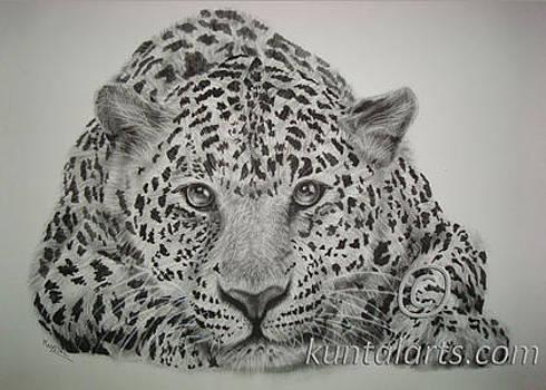 Leopard by Kuntal Chaudhuri