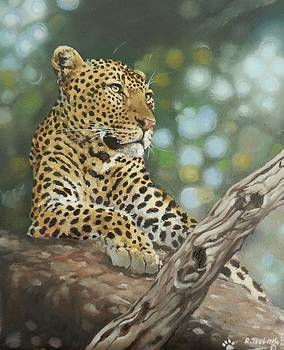 Leopard by Robert Teeling