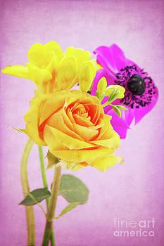 Angela Doelling AD DESIGN Photo and PhotoArt - Wonderful flowers
