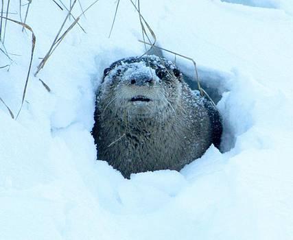 Let It Snow  by Jody Benolken