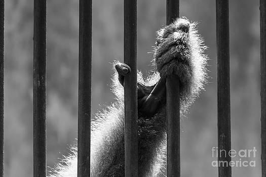 Let me free by Frederiko Ratu Kedang