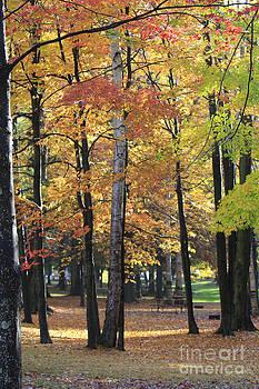 Lexington Park by Kathy DesJardins