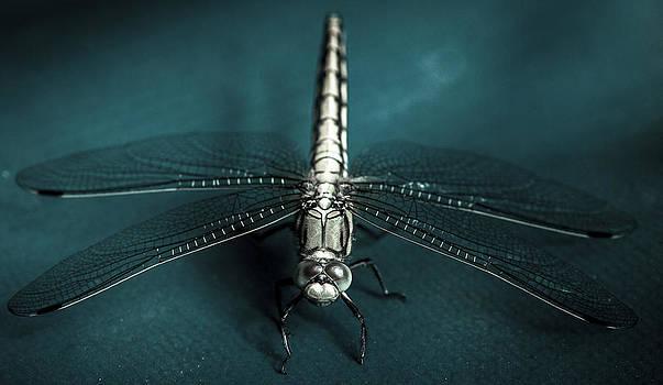 Libelle by Sitan Van Sluis