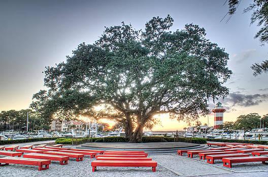 Liberty Oak by Bill LITTELL