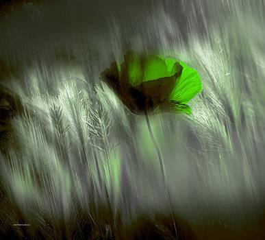 Libre by Alfonso Garcia