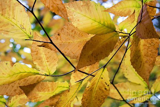 Barbara McMahon - Life in Autumn