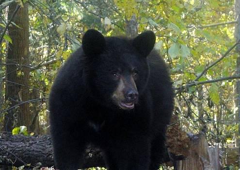 Life Is Good Black Bear by Jody Benolken
