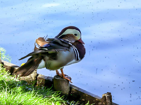 Life of Duck II by Nathalie Hope