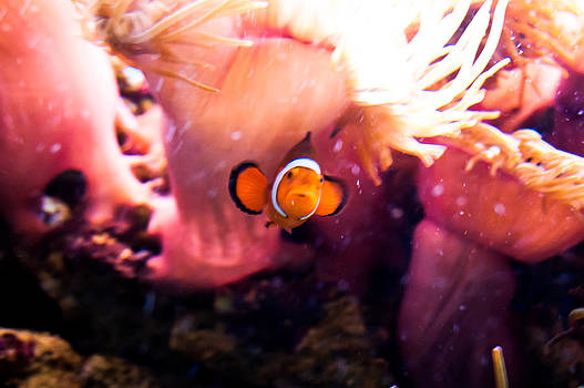 Life of Nemo by Nathalie Hope