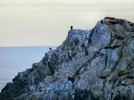 Life On The Rocks by Tonie Cook