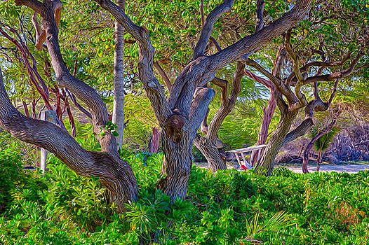 Omaste Witkowski - Lifeguarding Trees