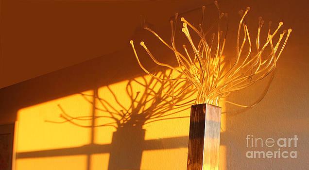 Light and Shadows by Carol McCutcheon