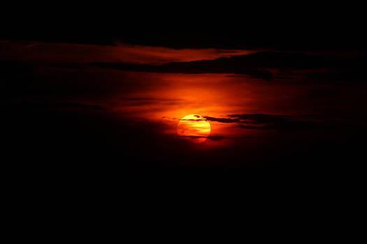 Light In Shadow by David  Jones