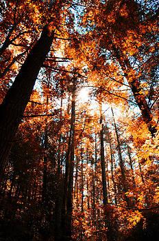 Light in the Forest by Heather Bridenstine