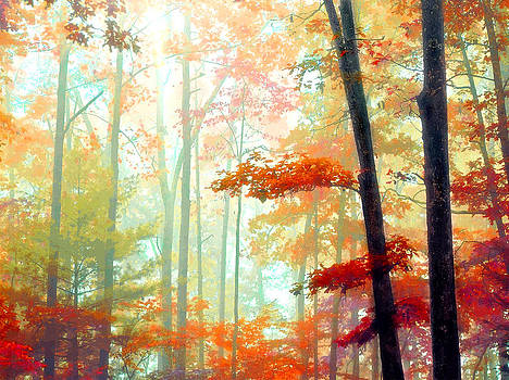 Light in the Forest by William Schmid