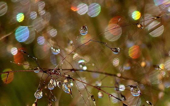 Rosanne Jordan - Light Show of Sparkles