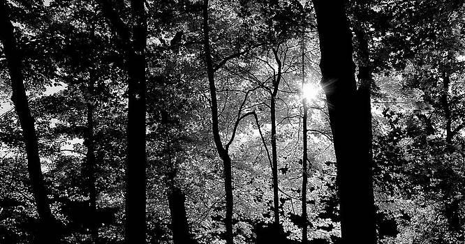 Rosanne Jordan - Light Star in the Forest