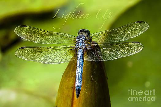 Lighten Up by Kimberly Nyce