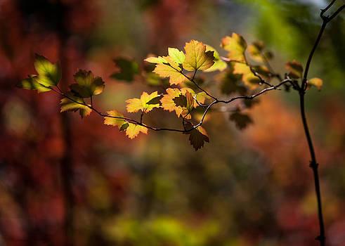 Lightly Falling by Aaron Aldrich