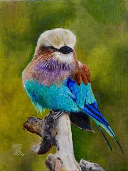 Lilac Breasted Roller Bird by Ralph Taeger