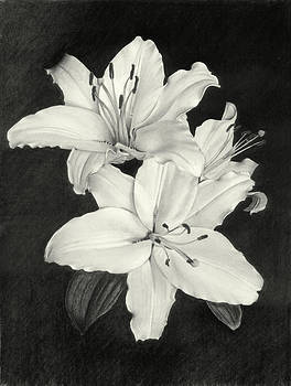 Lilies by Nicola Butt